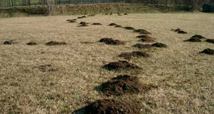 Mole Control in North Yorkshire, Durham and Cleveland